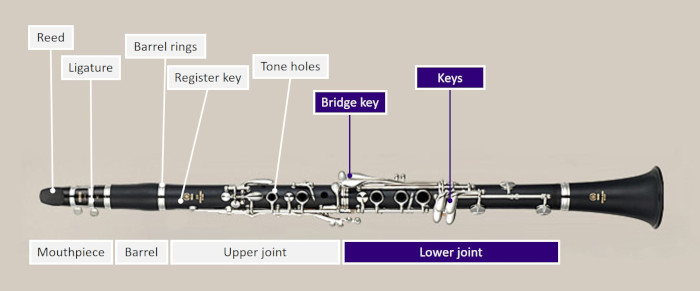 Diagram of a clarinet highlighting the lower joint, including bridge key and other keys
