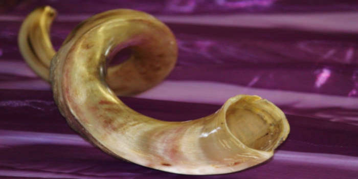 An old animal horn once used for making sounds