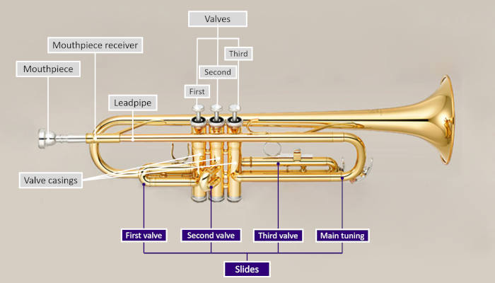 Diagram of a trumpet with parts labeled and valve slides highlighted in purple on a grey background