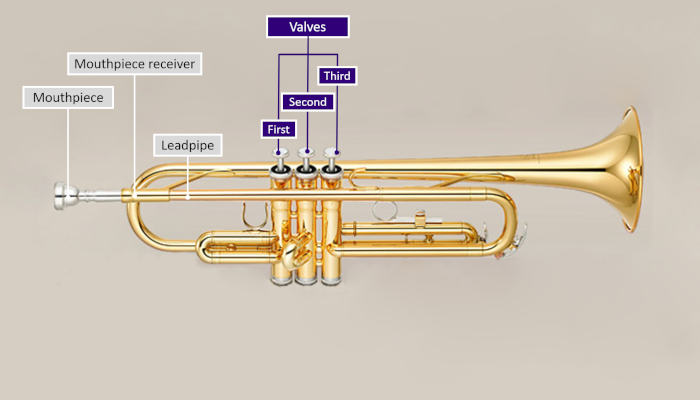 Diagram of a trumpet with parts labeled and valves highlighted in purple on a grey background